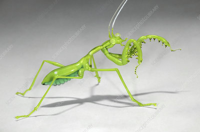 Mantis, glass sculpture