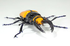 Stag beetle,glass sculpture