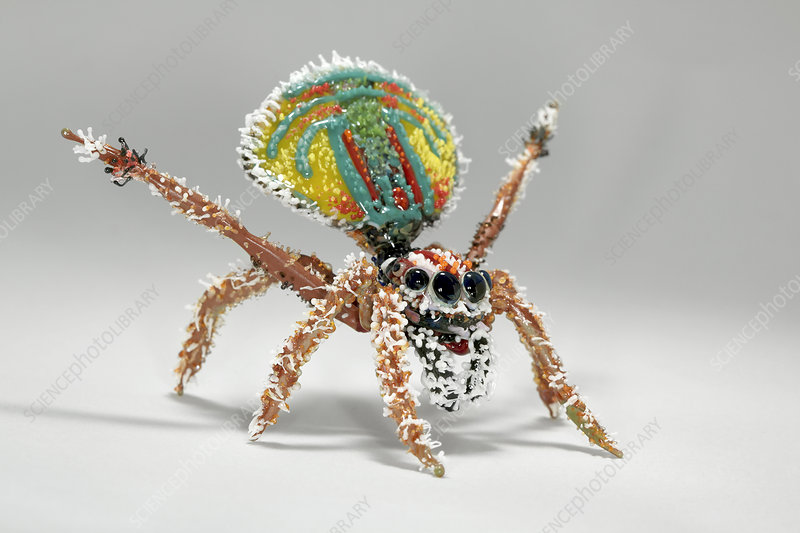 Peacock spider, glass sculpture