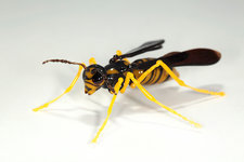 Wasp, glass sculpture