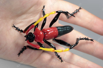 Beetle,glass sculpture
