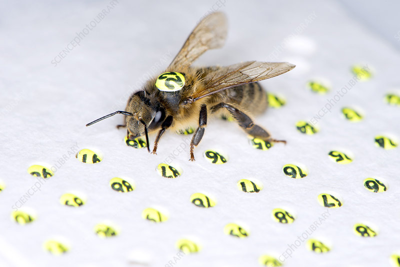 Honeybee radar tagging