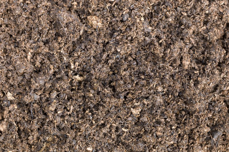 The structure of peat-based compost