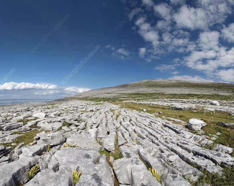 Burren limestone pavement