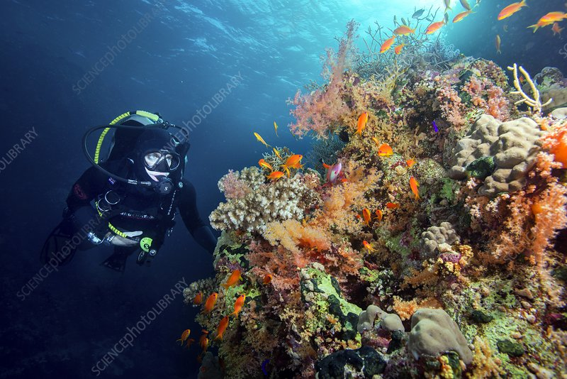 Diver with corals and reef fish