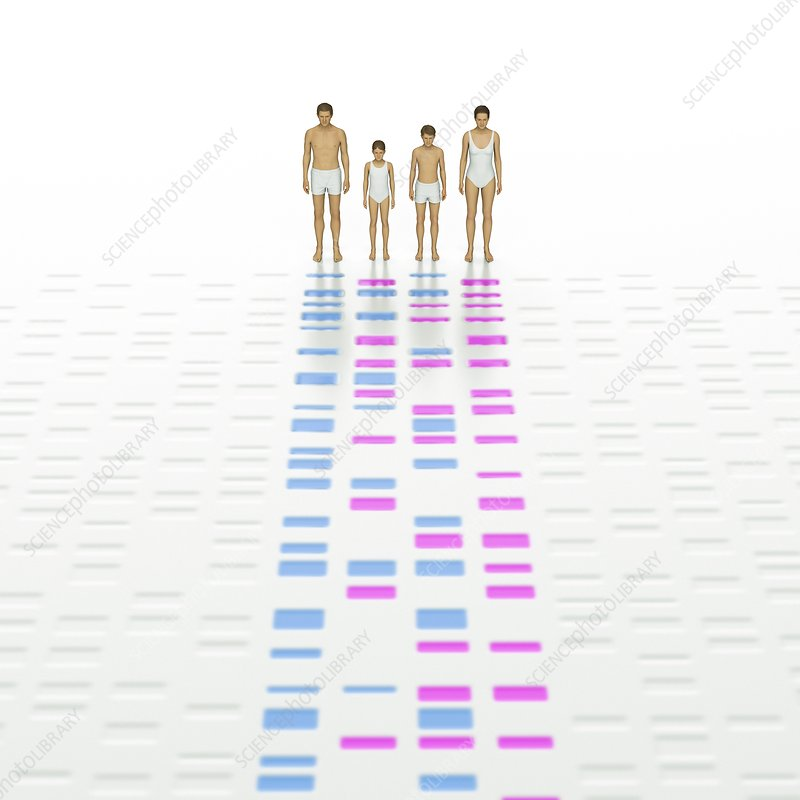 Genetic Relationships of a Family