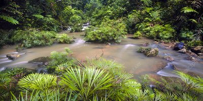 Tropical river bank