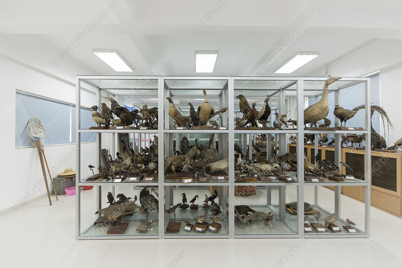 Ornithological specimens
