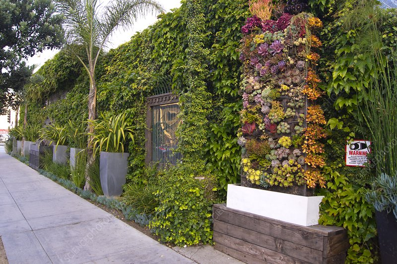 Green wall in Los Angeles