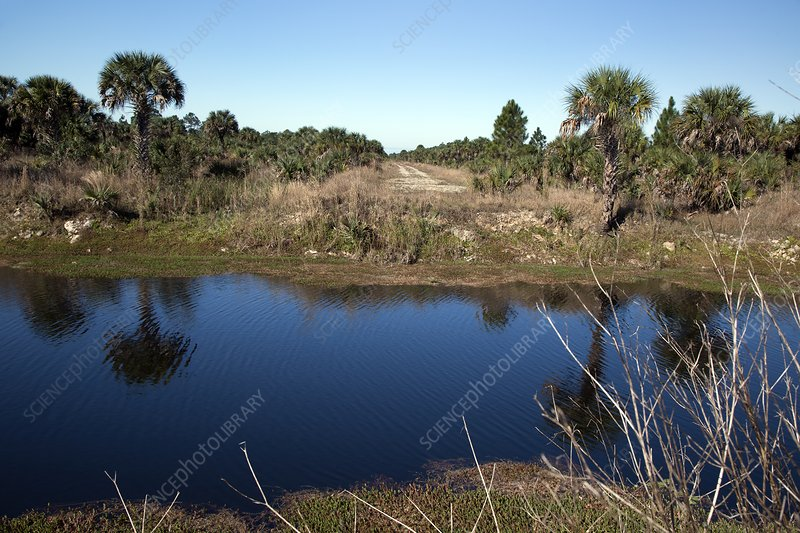 Everglades restoration, Florida, USA