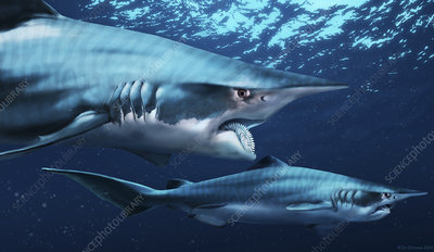 Helicoprion prehistoric shark