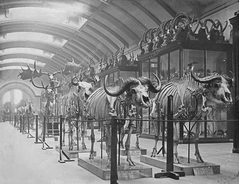 Osteological Gallery, 5th July 1892