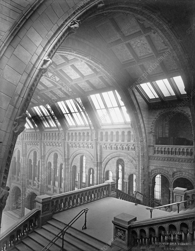 The Natural History Museum, 1882
