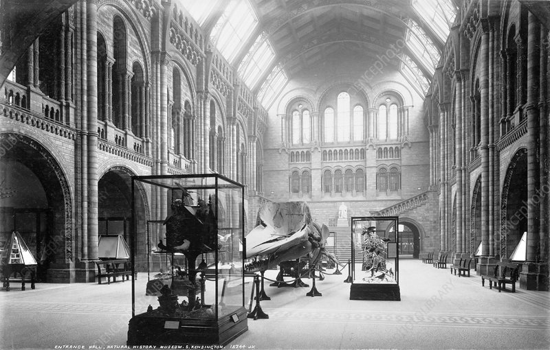 The Natural History Museum, 1902