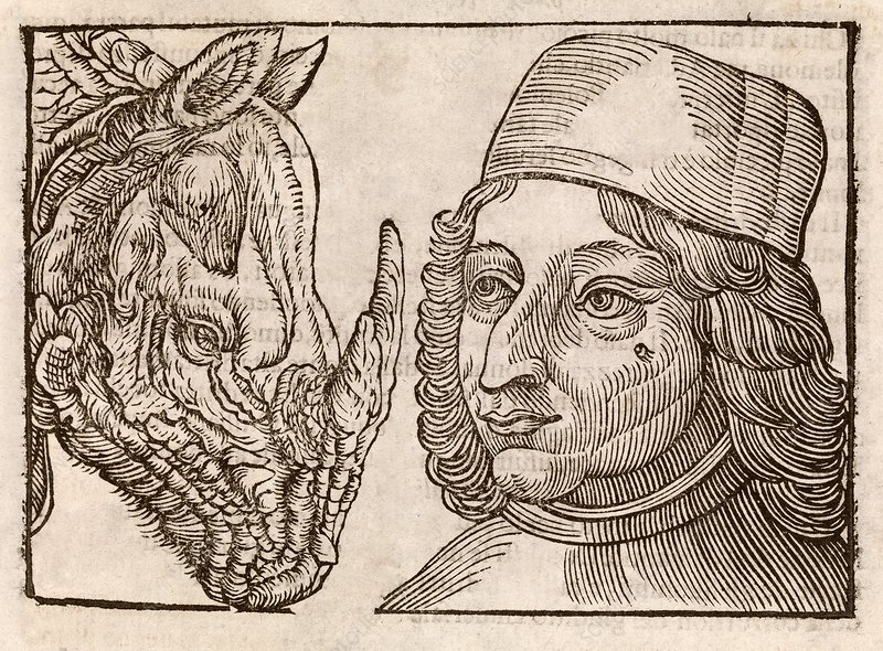 Man and rhino's head, 17th century
