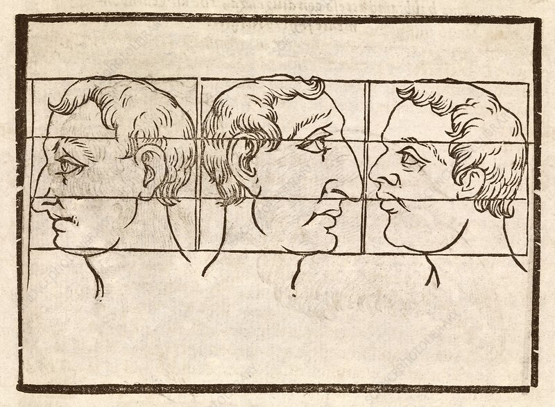 Three nose types, 17th century