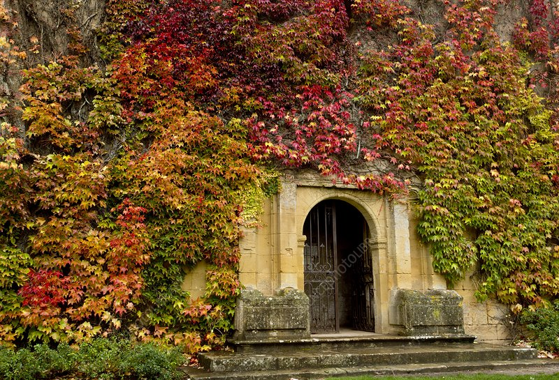 Gateway covered in Virginia creeper