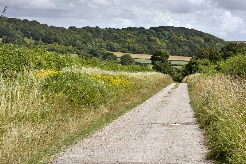 Country lane, UK