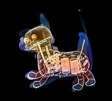 Toy robot dog, X-ray