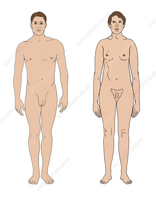 Klinefelter's Syndrome and Healthy Male