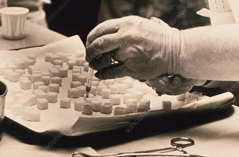 Preparing polio vaccines, 1976