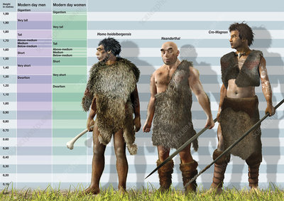 Height variation in Pleistocene hominids