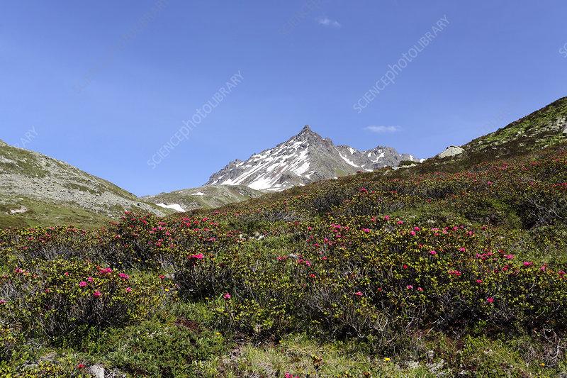 Mountain landscape, Switzerland