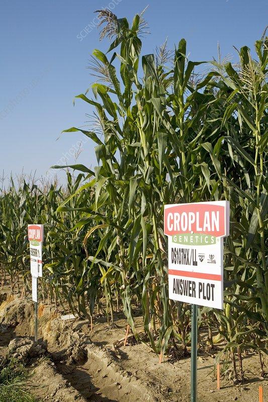 Seed company crop demonstration plot