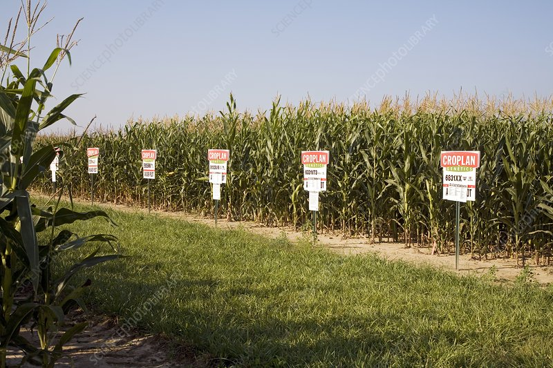 Seed company crop demonstration plot