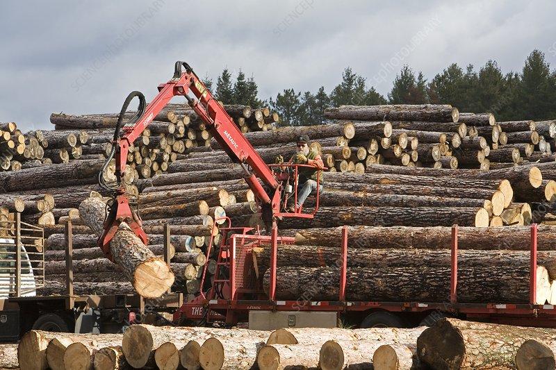 Logs at a sawmill