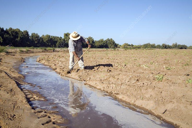 Worker digging irrigation channels