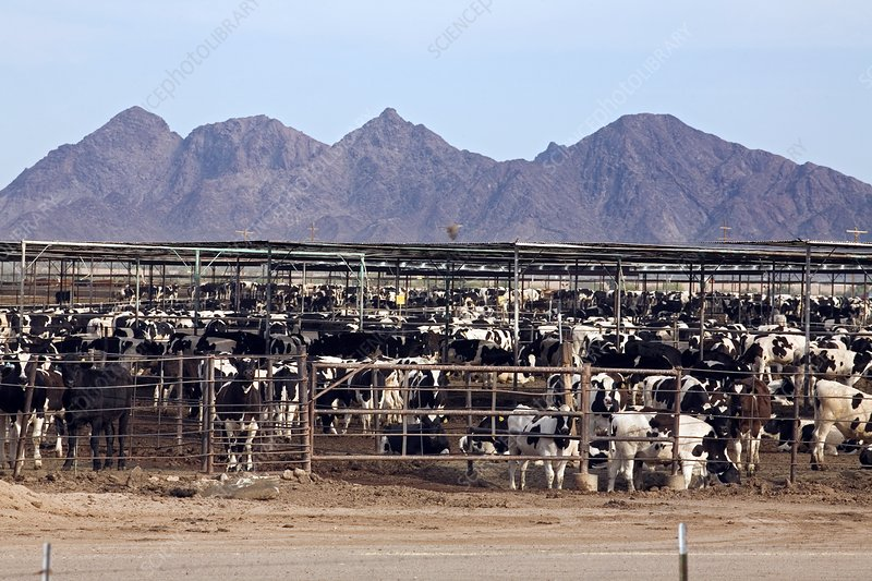 Image result for USA intensive animal farming