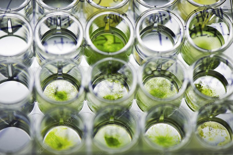 Algae biofuel research