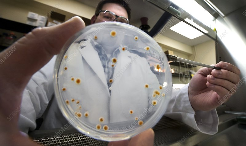 Bacteria used to produce biofuels