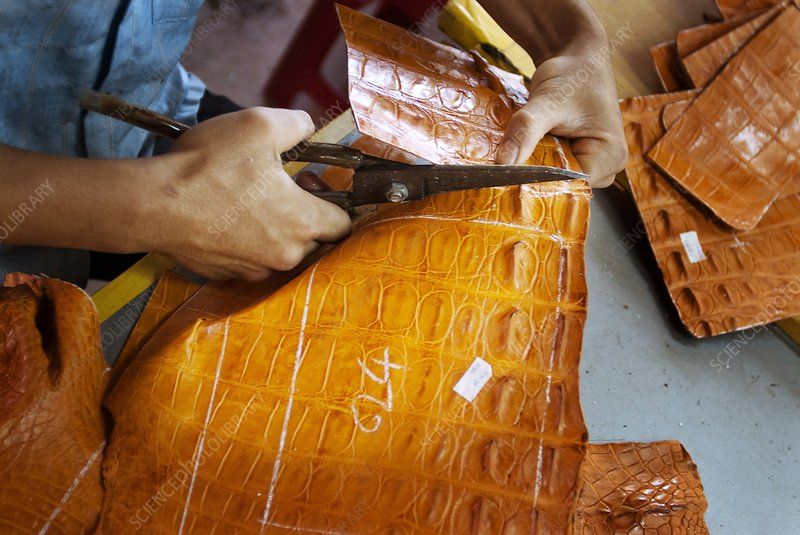 Cutting crocodile leather