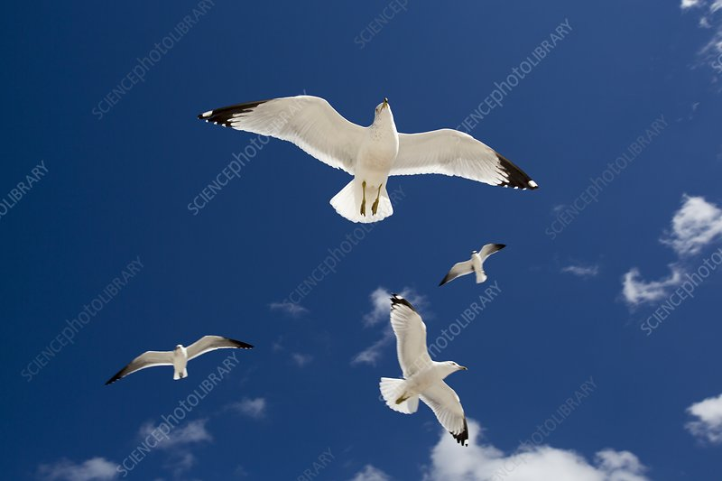 Gulls flying against blue sky