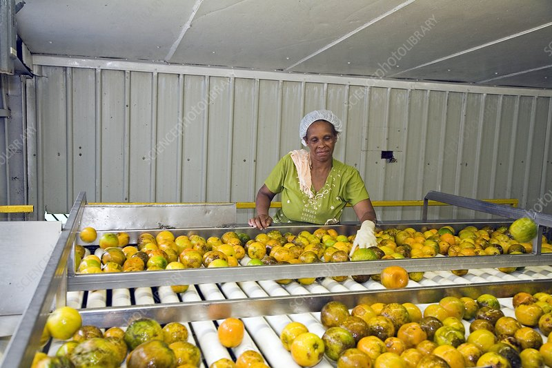 Orange processing factory, Belize