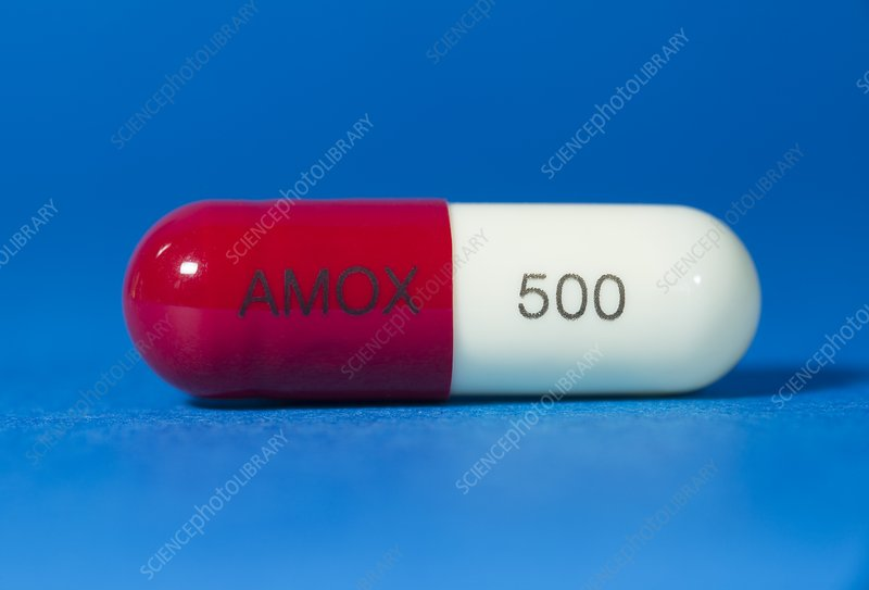 Amoxicillin antibiotic drug
