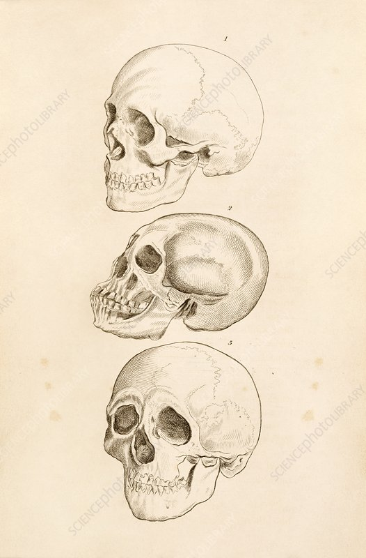 Human skulls, 19th century artwork