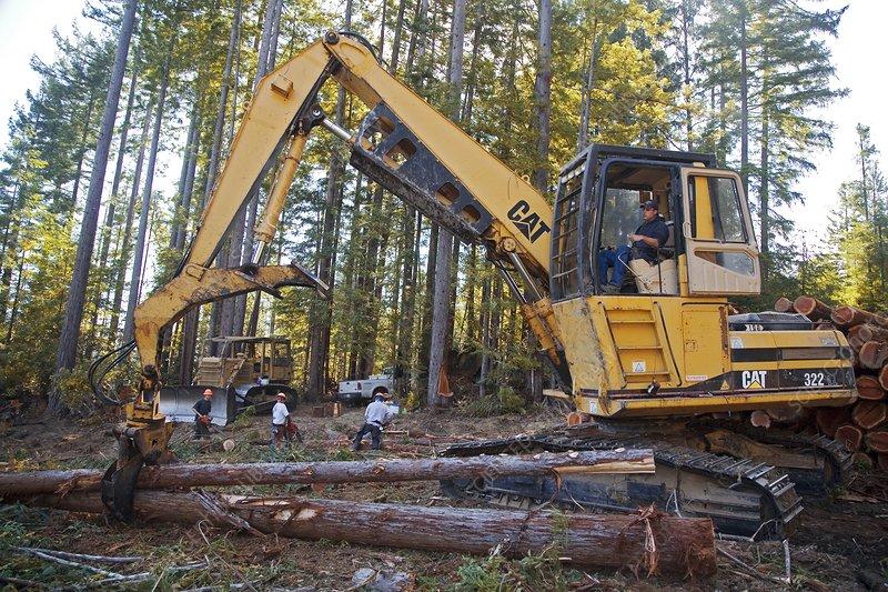 Logging redwood trees, California, USA