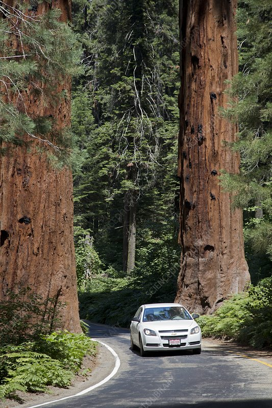 Tourism in Sequoia National Park