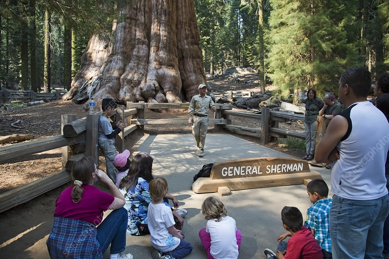 Tourists visiting General Sherman tree
