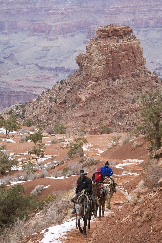 Winter mule train in the Grand Canyon