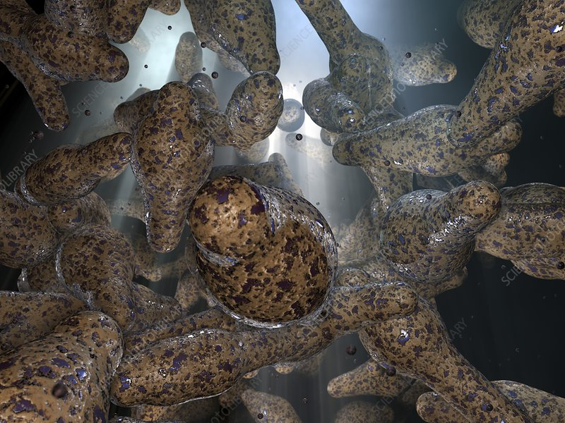 Clostridium bacteria, artwork