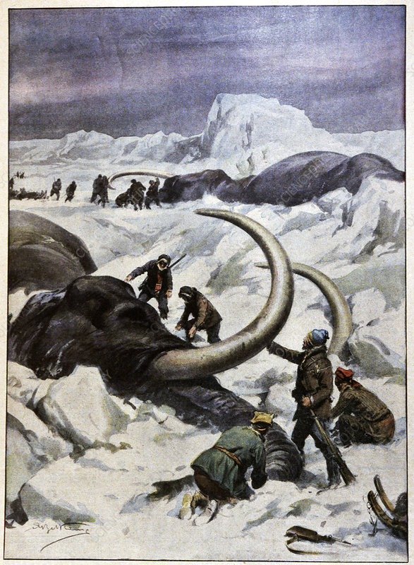 Discovery of frozen mammoths