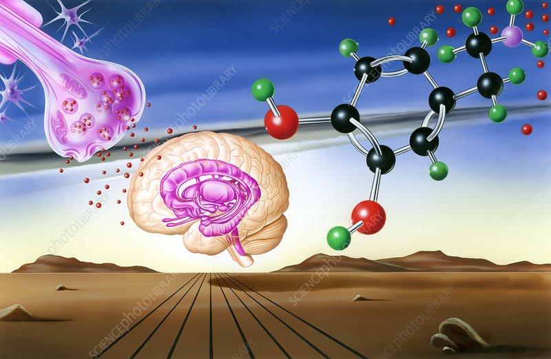 Dopamine brain chemistry, artwork
