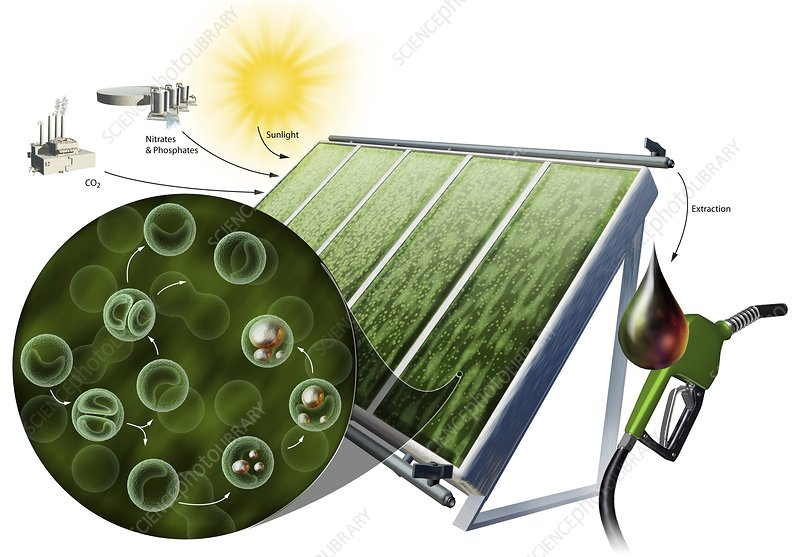 Biofuel from algae, illustration