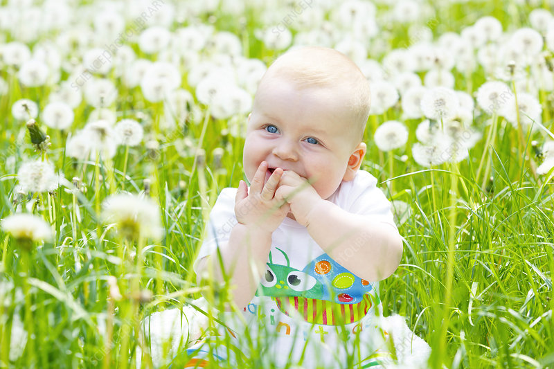 Baby boy with dandelions