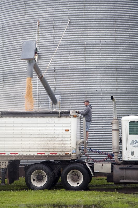 Loading grain from a silo