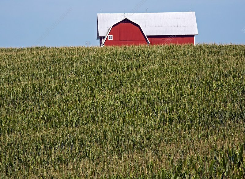 Arable farm, Michigan, USA